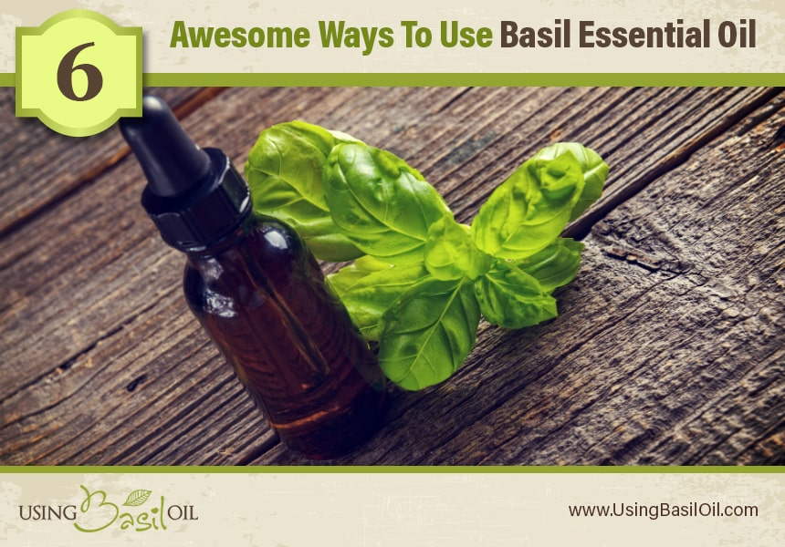 basil oil for urinary tract