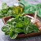 6 Awesome Ways to Use Basil Essential Oil